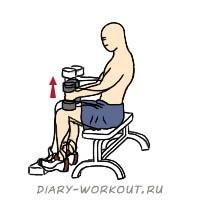 Подъем на носки сидя техника выполнения какие мышцы работают