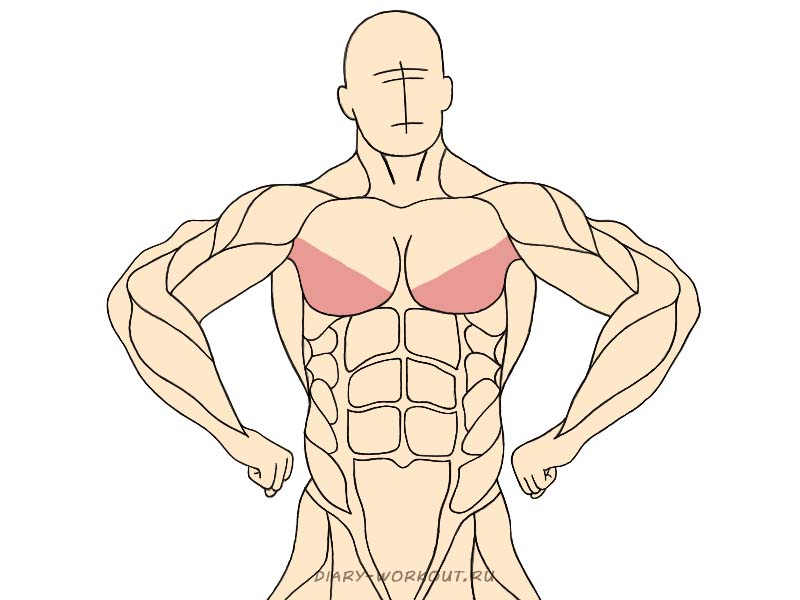 Нижний пучок большой грудной мышцы