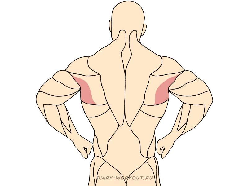 Большая круглая мышца