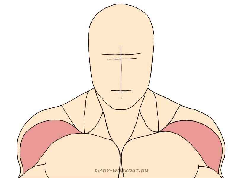 Передний пучок дельтовидной мышцы, передние дельты