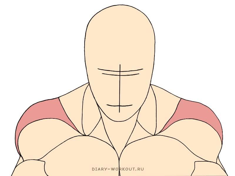 Средний пучок дельтовидной мышцы, средние дельты