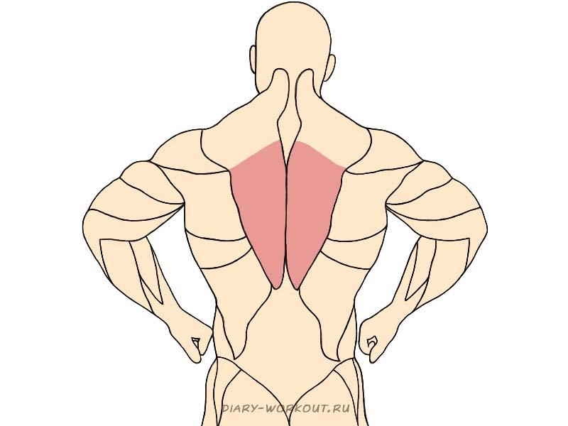 Нижняя часть трапециевидной мышцы