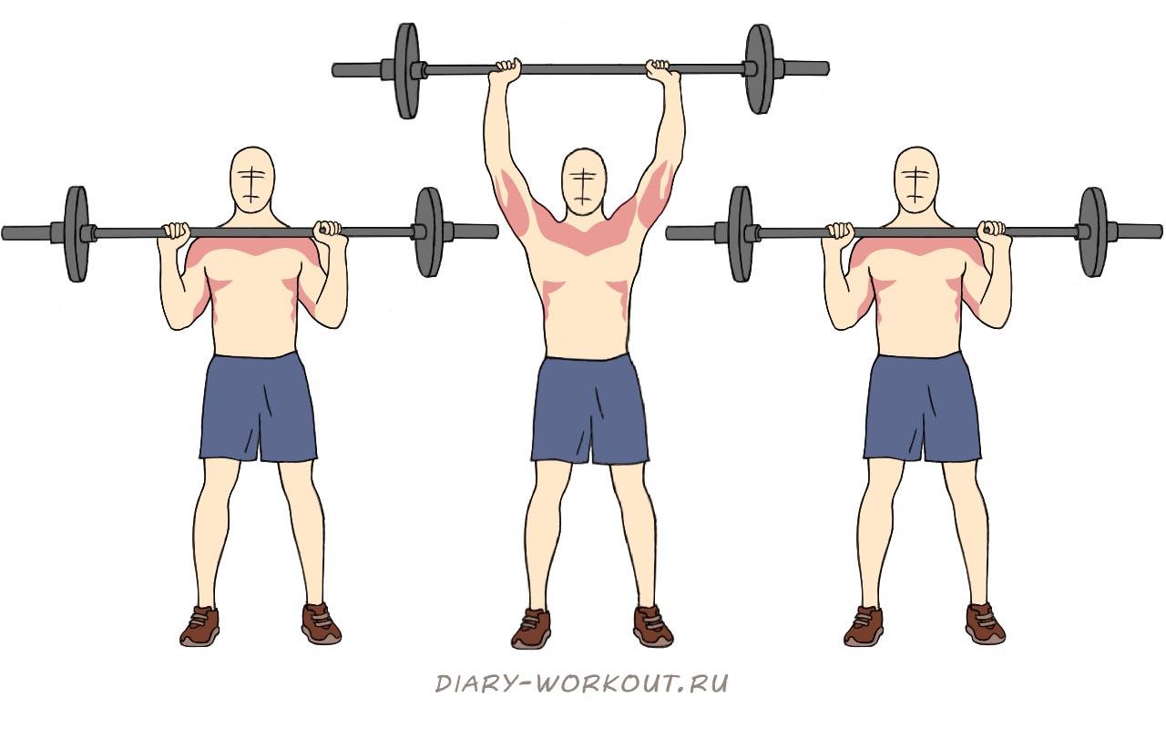 Упражнения со штангой для плеч в картинках горизонтальная линия