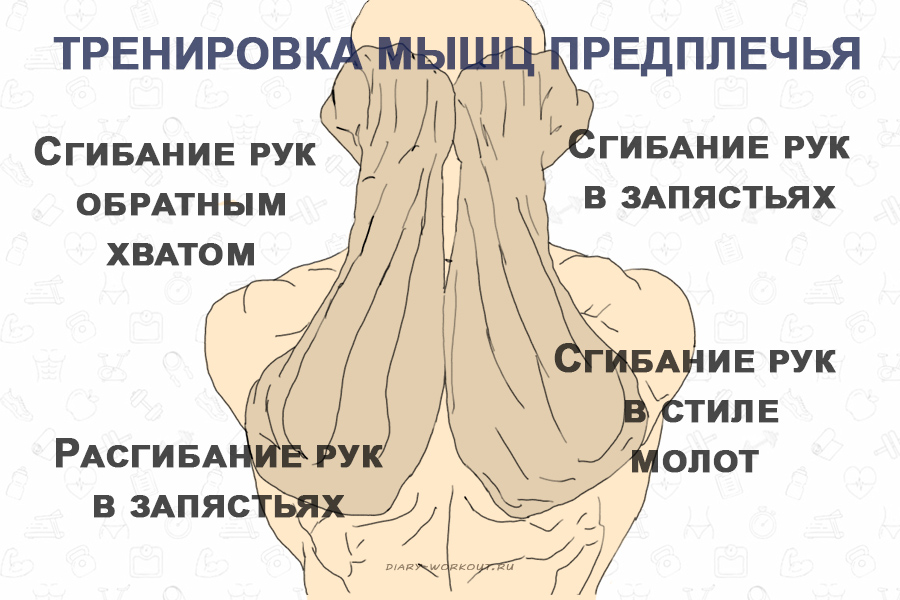 Тренировка мышц предплечья, упражнения со штангой и гантелями
